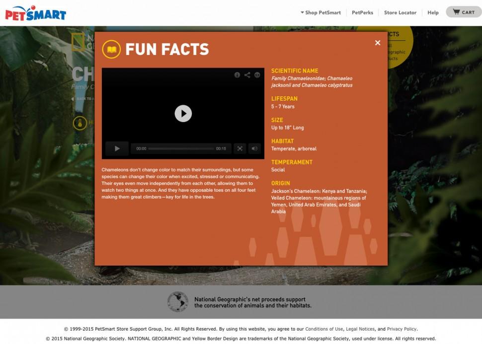 CoryVanNote-Portfolio-2014-PetSmart-NatGeoHub-Chameleon-FunFacts