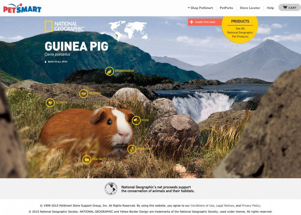CoryVanNote-Portfolio-2014-PetSmart-NatGeoHub-GuineaPig