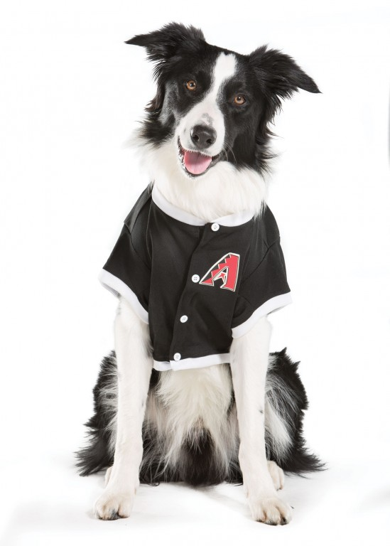 CoryVanNote-Portfolio-2015-PetSmartPatio-Photos-DogInJersey
