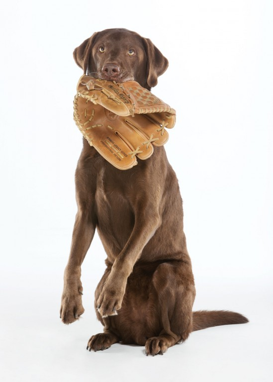 CoryVanNote-Portfolio-2015-PetSmartPatio-Photos-DogWithGlove
