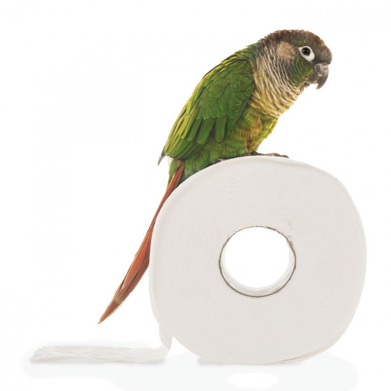 CoryVanNote-Portfolio-2016-PetSmart-BrandShoot-Bird-ConureOnPaper