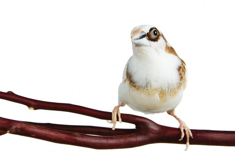 CoryVanNote-Portfolio-2016-PetSmart-BrandShoot-Bird-FinchOnBranch