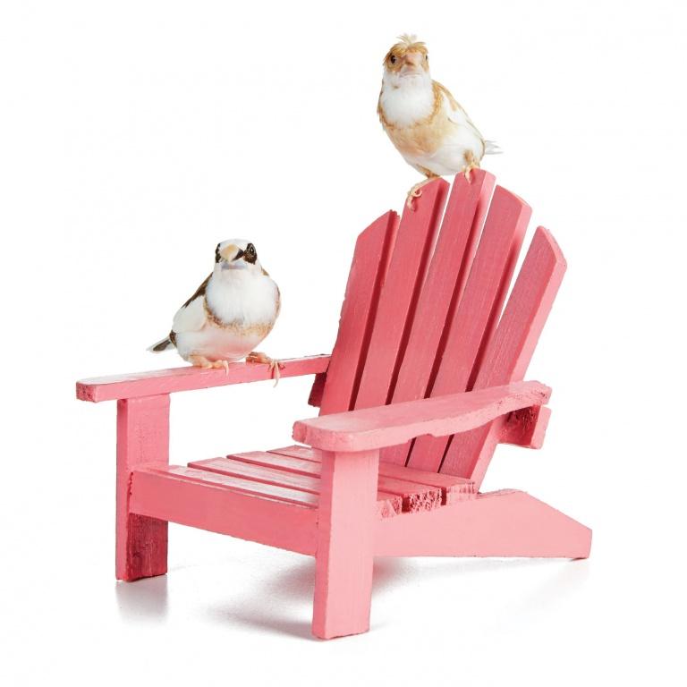 CoryVanNote-Portfolio-2016-PetSmart-BrandShoot-Bird-FinchesOnChair