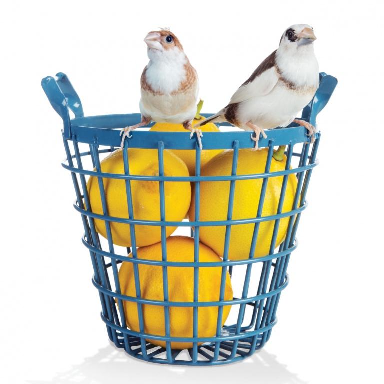 CoryVanNote-Portfolio-2016-PetSmart-BrandShoot-Bird-FinchesOnLemonBucket