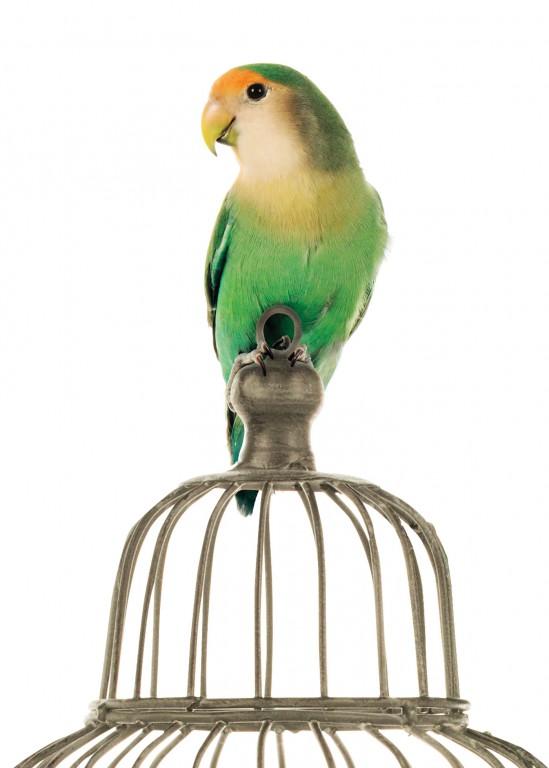 CoryVanNote-Portfolio-2016-PetSmart-BrandShoot-Bird-LovebirdOnCage