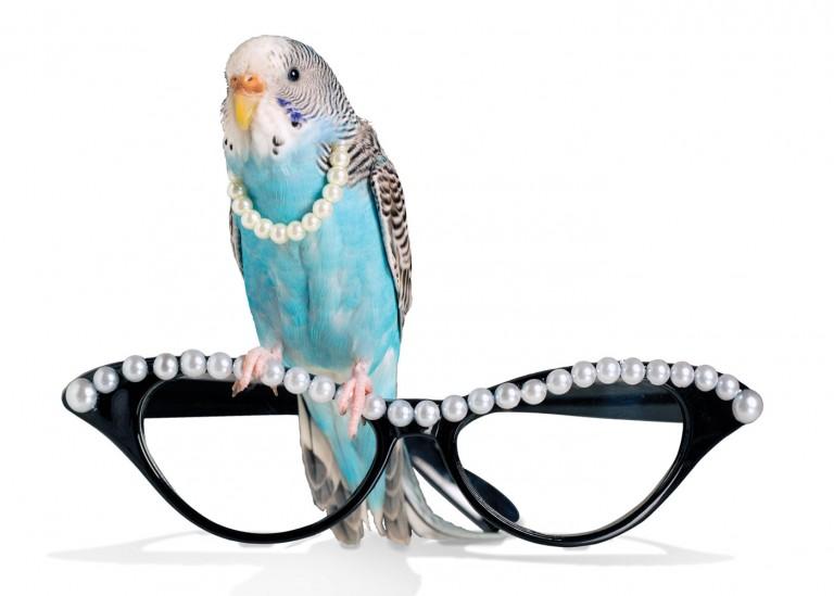 CoryVanNote-Portfolio-2016-PetSmart-BrandShoot-Bird-ParakeetOnGlasses