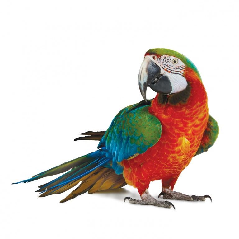 CoryVanNote-Portfolio-2016-PetSmart-BrandShoot-Bird-Parrot