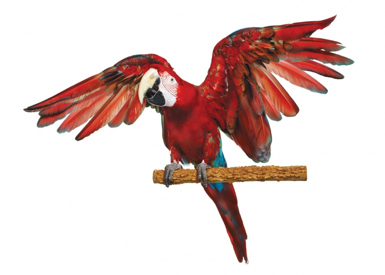 CoryVanNote-Portfolio-2016-PetSmart-BrandShoot-Bird-ParrotWideWings