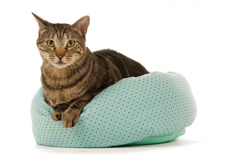 CoryVanNote-Portfolio-2016-PetSmart-BrandShoot-Cat-InBed
