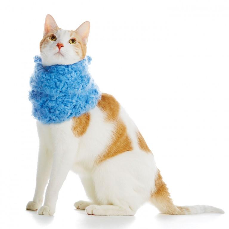 CoryVanNote-Portfolio-2016-PetSmart-BrandShoot-Cat-InScarf