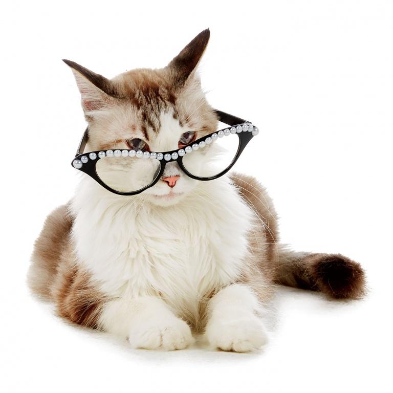 CoryVanNote-Portfolio-2016-PetSmart-BrandShoot-Cat-SassyCat