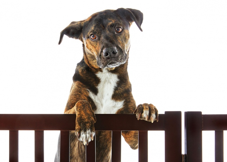 CoryVanNote-Portfolio-2016-PetSmart-BrandShoot-Dog-BehindGate
