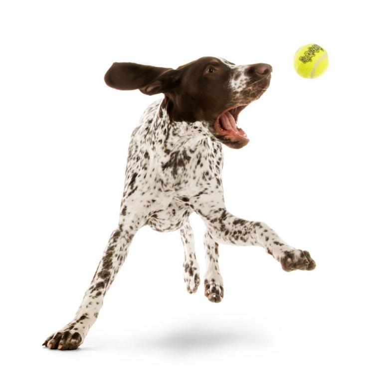 CoryVanNote-Portfolio-2016-PetSmart-BrandShoot-Dog-DalmationJumpingForBall