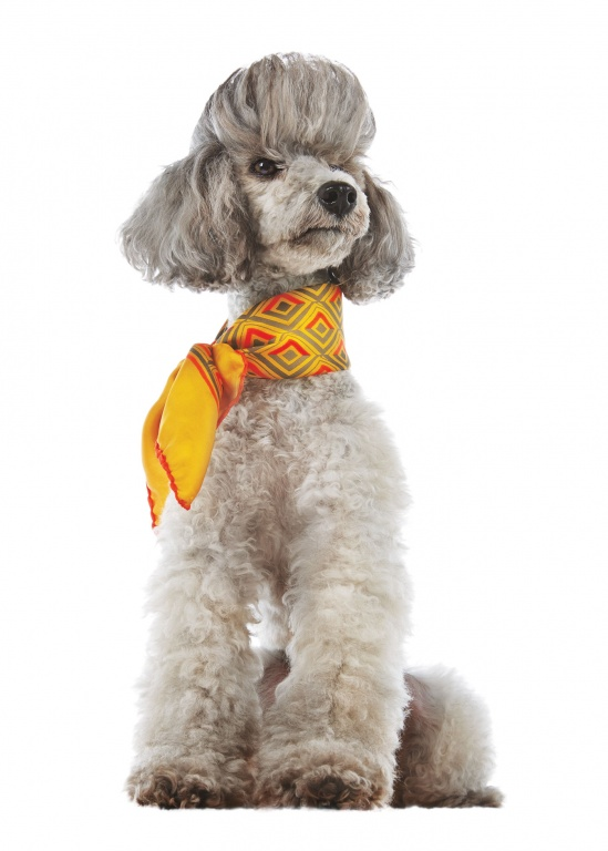 CoryVanNote-Portfolio-2016-PetSmart-BrandShoot-Dog-HighEndScarf
