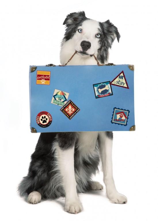 CoryVanNote-Portfolio-2016-PetSmart-BrandShoot-Dog-HoldingSuitcase
