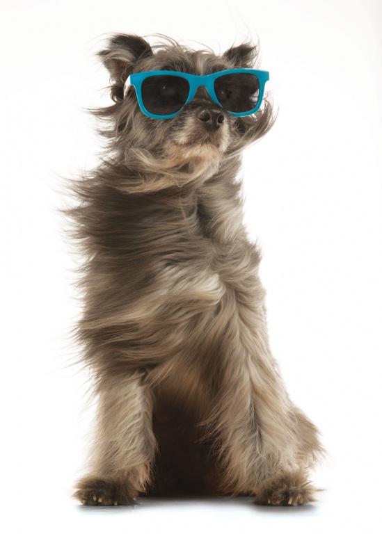 CoryVanNote-Portfolio-2016-PetSmart-BrandShoot-Dog-InWind