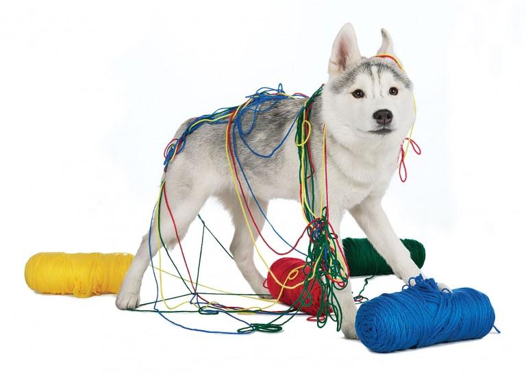 CoryVanNote-Portfolio-2016-PetSmart-BrandShoot-Dog-TiedInYarn