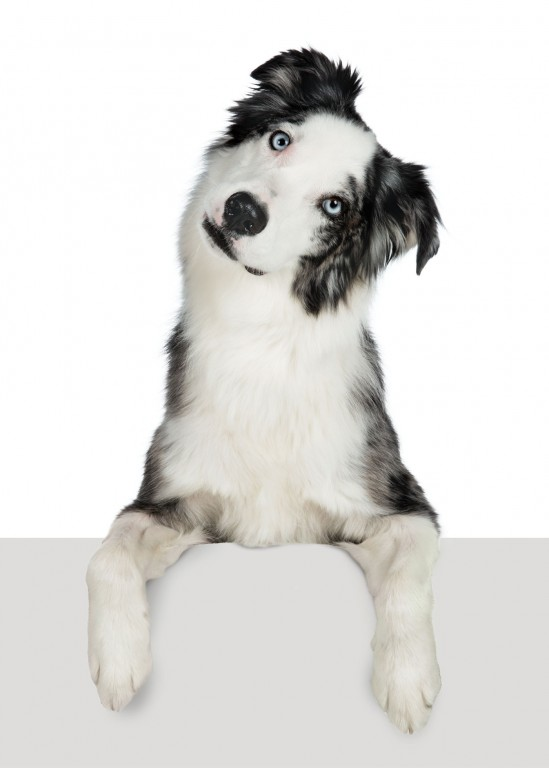 CoryVanNote-Portfolio-2016-PetSmart-BrandShoot-Dog-TiltedHead