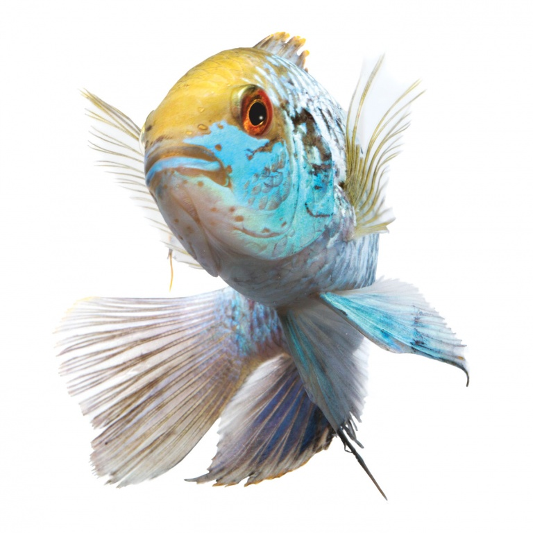 betta fish for sale petsmart everything about fishing activities