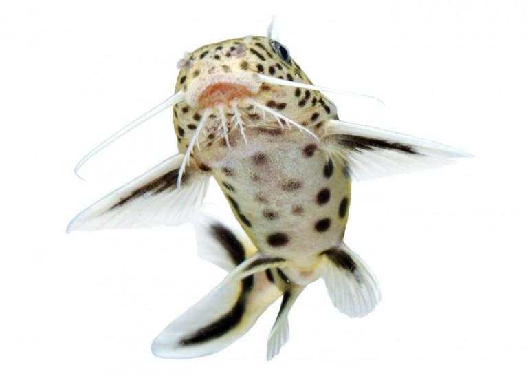 CoryVanNote-Portfolio-2016-PetSmart-BrandShoot-Fish-Catfish
