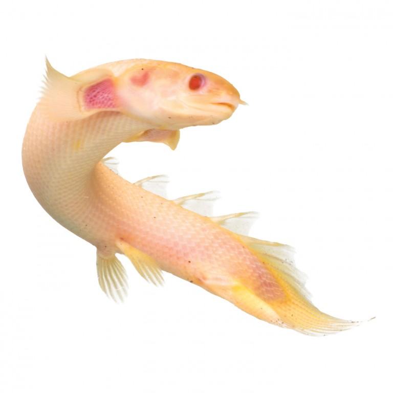 Petsmart fish elegant light with petsmart fish how to for Petsmart live fish