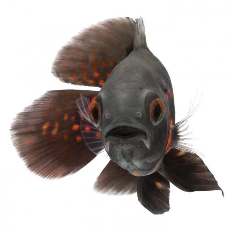 CoryVanNote-Portfolio-2016-PetSmart-BrandShoot-Fish-Oscar
