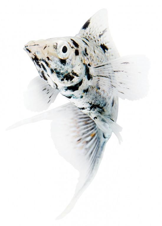 CoryVanNote-Portfolio-2016-PetSmart-BrandShoot-Fish-Platty