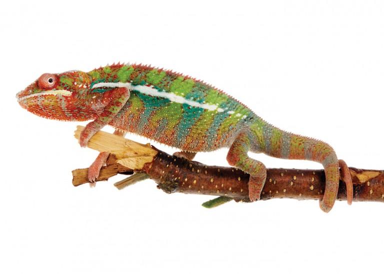 CoryVanNote-Portfolio-2016-PetSmart-BrandShoot-Reptile-ChameleonOnStick
