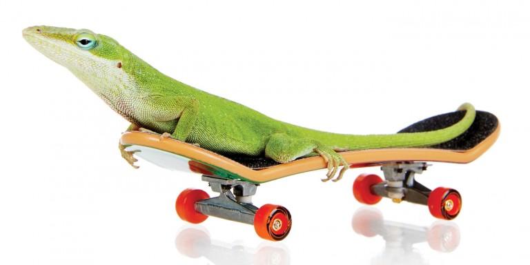 CoryVanNote-Portfolio-2016-PetSmart-BrandShoot-Reptile-GeckoOnSkateboard