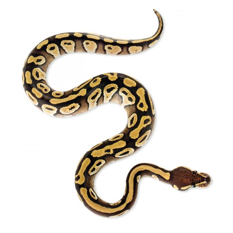 CoryVanNote-Portfolio-2016-PetSmart-BrandShoot-Reptile-SnakeS