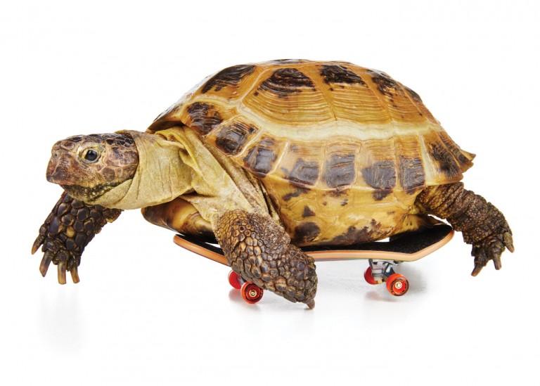 CoryVanNote-Portfolio-2016-PetSmart-BrandShoot-Reptile-TortoiseOnSkateboard