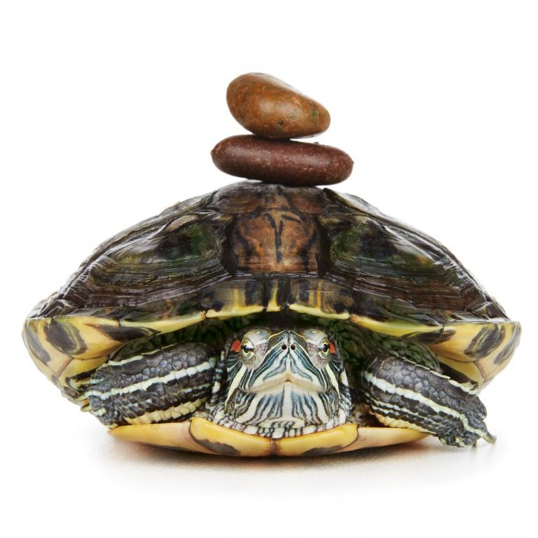 CoryVanNote-Portfolio-2016-PetSmart-BrandShoot-Reptile-TurtleZen