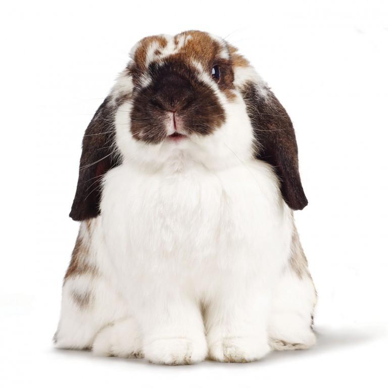 CoryVanNote-Portfolio-2016-PetSmart-BrandShoot-SmallPet-Bunny