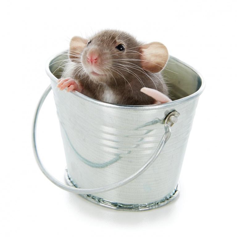 CoryVanNote-Portfolio-2016-PetSmart-BrandShoot-SmallPet-MouseInBucket