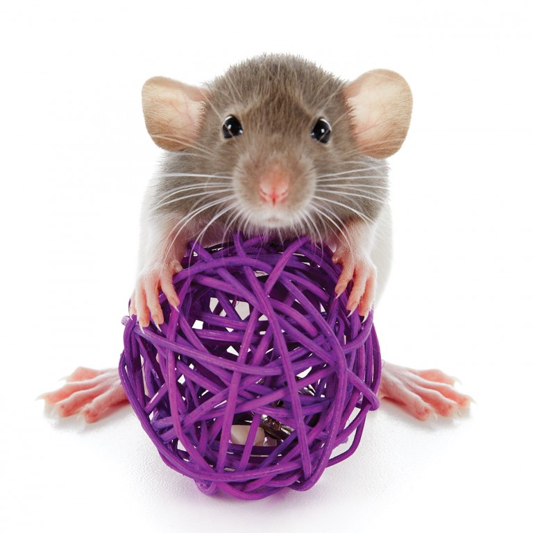 CoryVanNote-Portfolio-2016-PetSmart-BrandShoot-SmallPet-MouseWBall