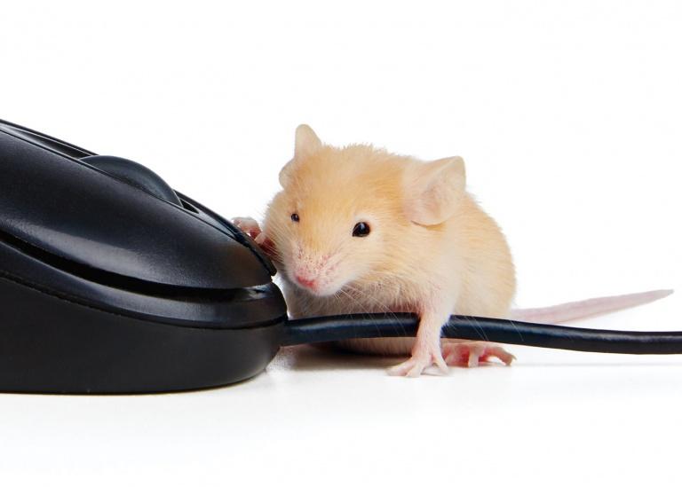 CoryVanNote-Portfolio-2016-PetSmart-BrandShoot-SmallPet-MouseWMouse
