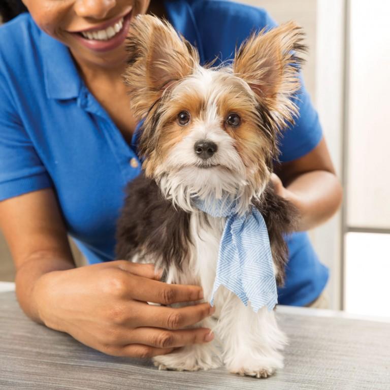 CoryVanNote-Portfolio-2016-PetSmart-ServicesShoot-Grooming-Bandana