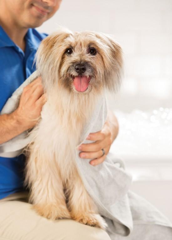 CoryVanNote-Portfolio-2016-PetSmart-ServicesShoot-Grooming-Bath