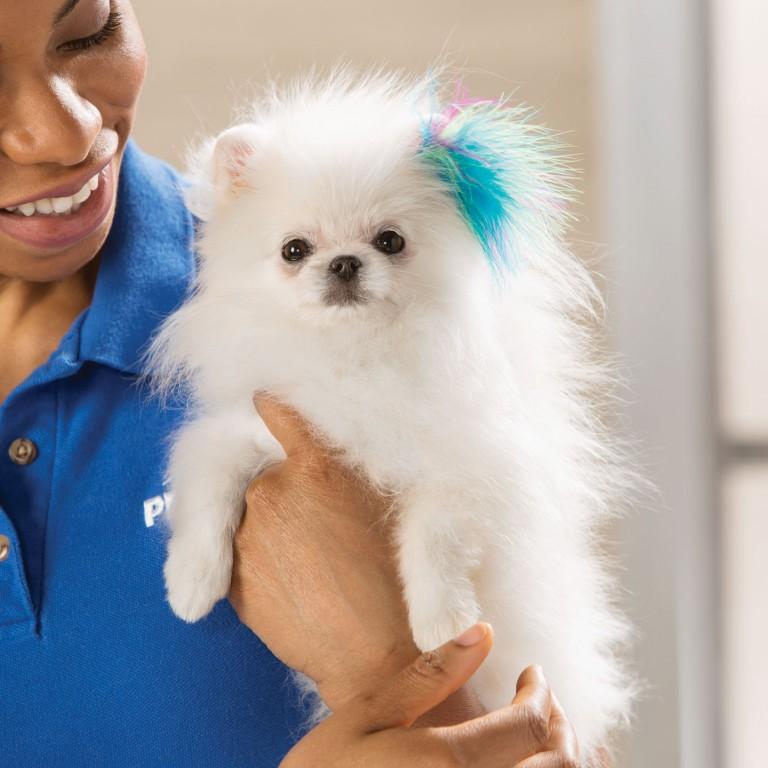 CoryVanNote-Portfolio-2016-PetSmart-ServicesShoot-Grooming-Feather