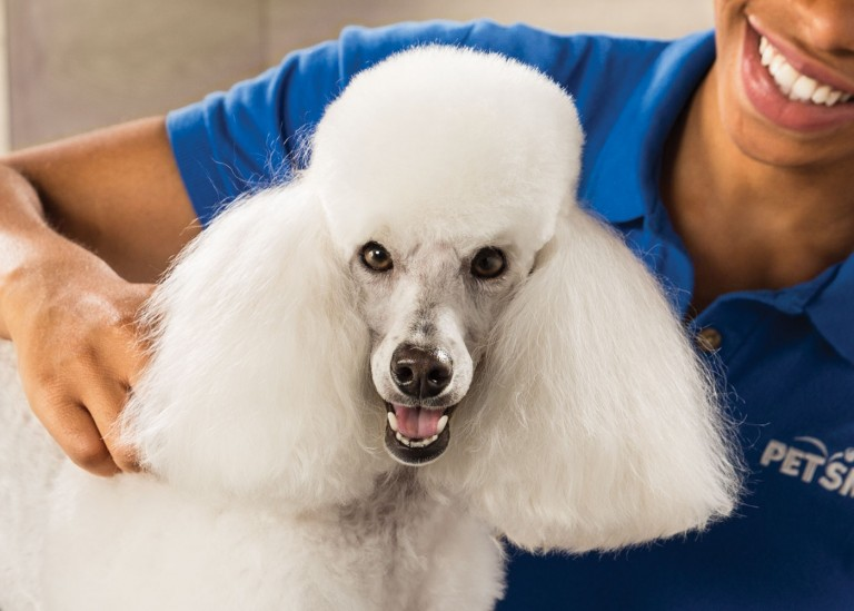 CoryVanNote-Portfolio-2016-PetSmart-ServicesShoot-Grooming-Poodle