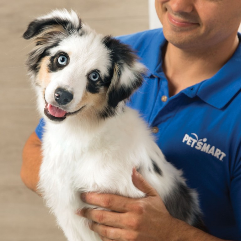 CoryVanNote-Portfolio-2016-PetSmart-ServicesShoot-Grooming-Puppy