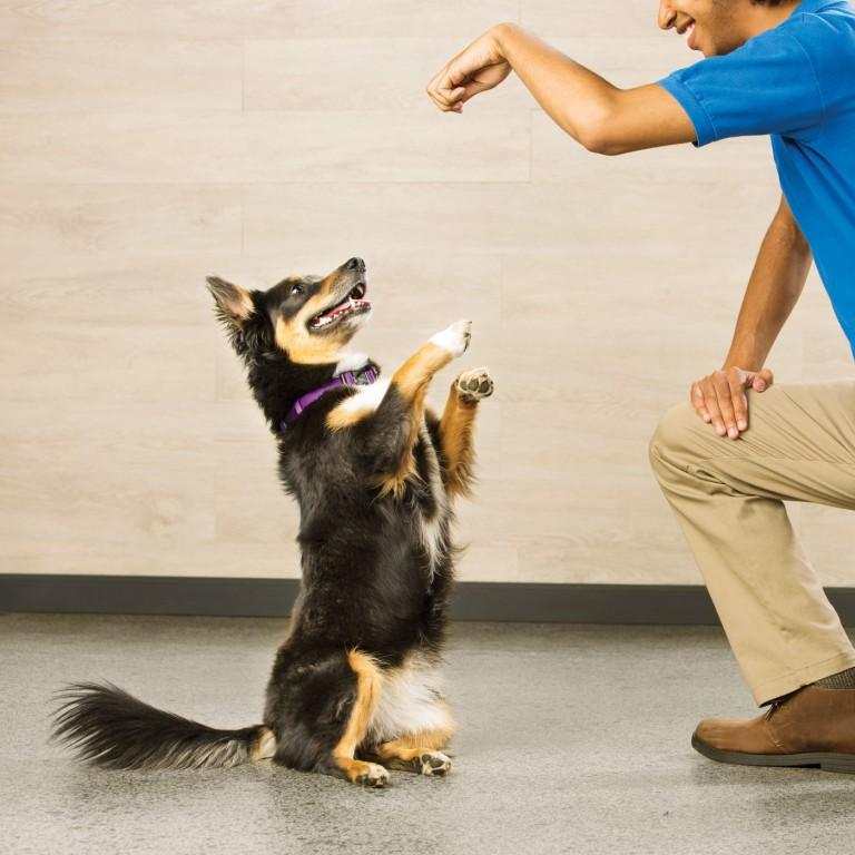CoryVanNote-Portfolio-2016-PetSmart-ServicesShoot-Training-SitUp
