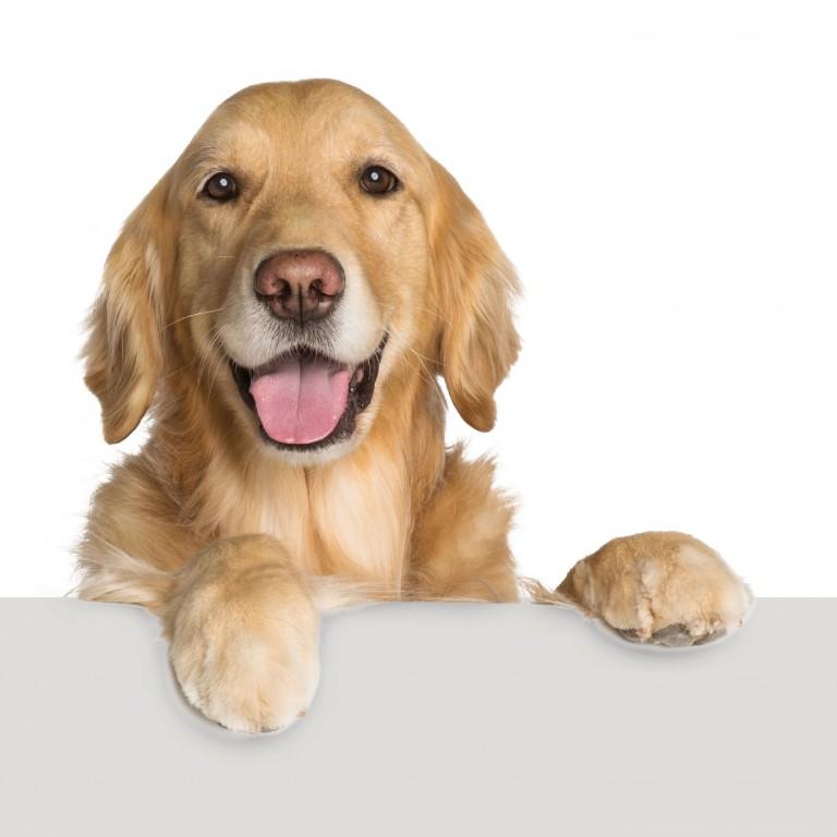 CoryVanNote-Portfolio-2016-PetSmart-ServicesShoot-WhiteSweep-GoldenOnLedge