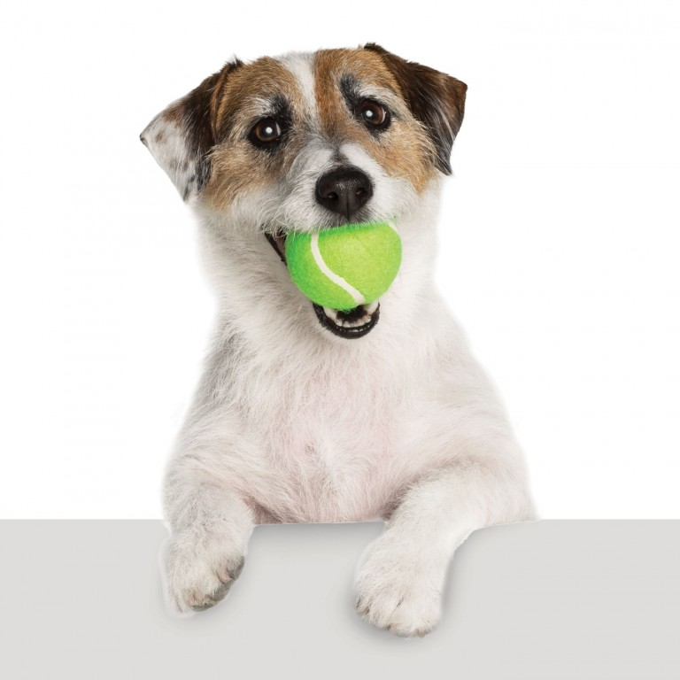 CoryVanNote-Portfolio-2016-PetSmart-ServicesShoot-WhiteSweep-HoldBallOverLedge
