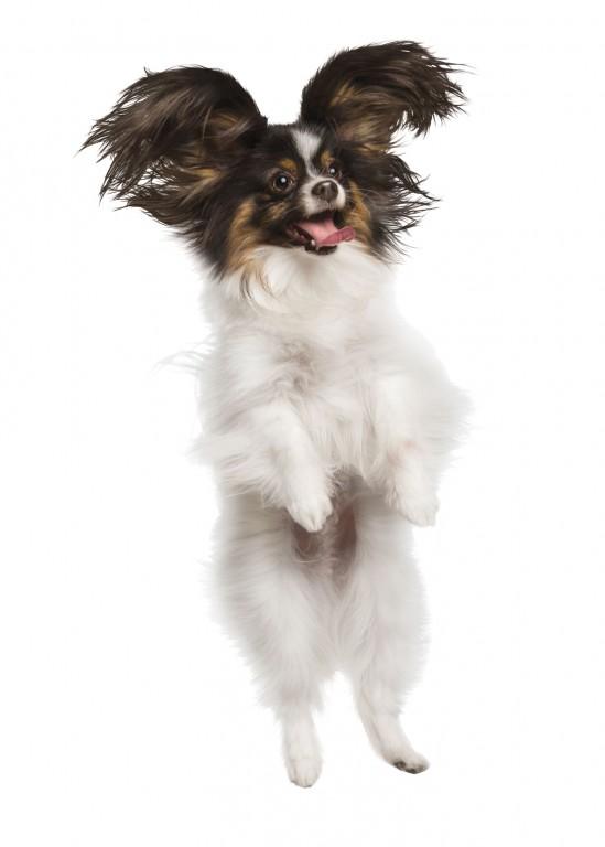 CoryVanNote-Portfolio-2016-PetSmart-ServicesShoot-WhiteSweep-JumpingDog